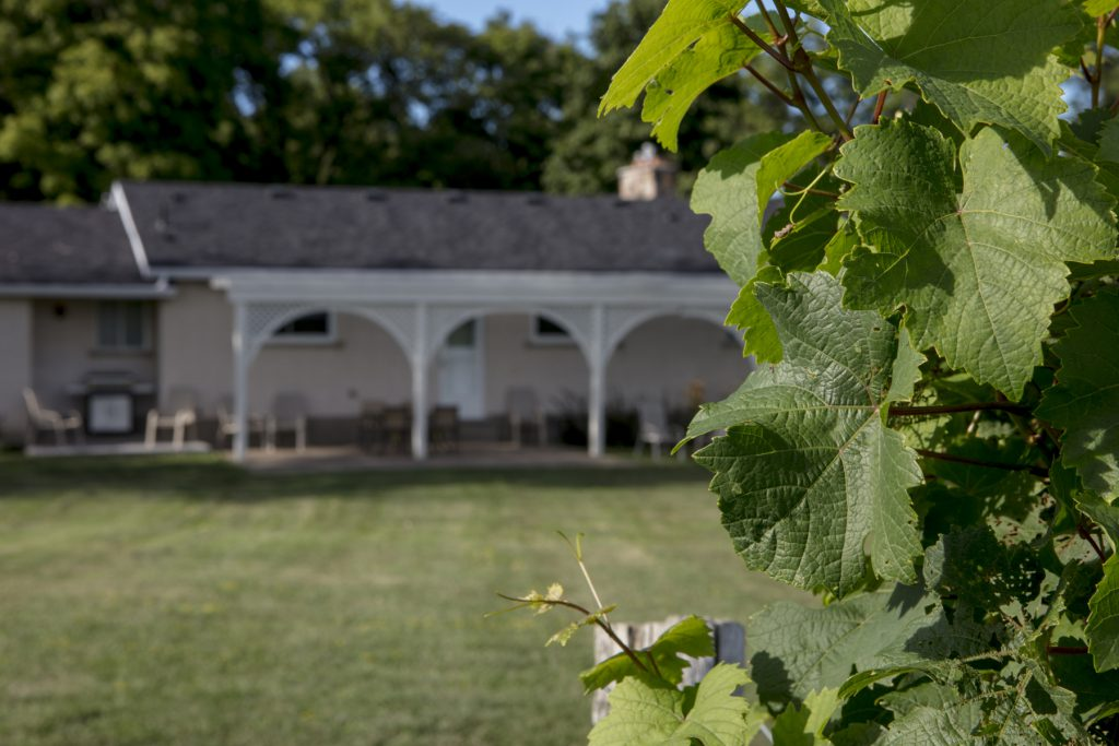 GuestHouse-BackViewVineyard